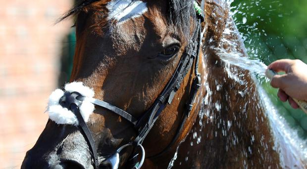 Frankel is washed down after taking his tally to 12 wins in 12 races in the Qipco Sussex Stakes at Glorious Goodwood