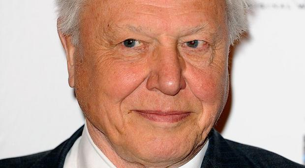 Sir David Attenborough is working on a music documentary with Bjork