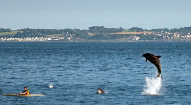 Kayakers in Belfast Lough were able to get close to a pod of around 20 bottlenose dolphins last Friday