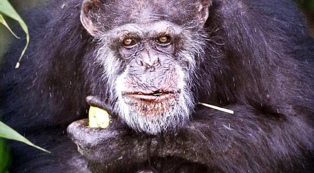 Andrew Oberle was mauled by chimpanzees at an animal refuge in South Africa in June
