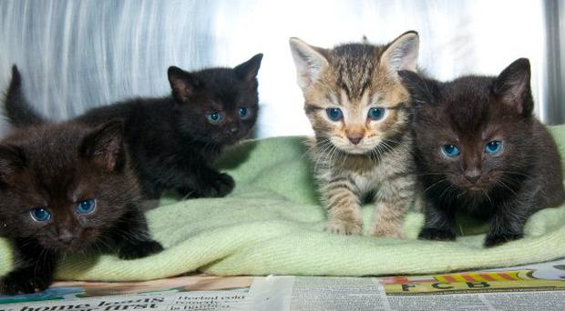 Boys caught trying to burn kitten alive - BelfastTelegraph co uk