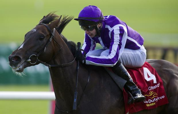 Johnny Murtagh is likely to team up with Ursa Major for the St Leger at Doncaster on Saturday