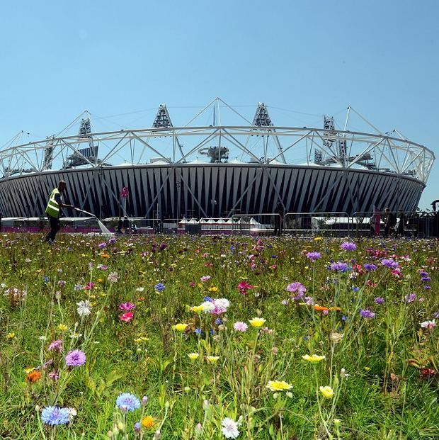 A nature charity says Britain is gradually losing its wildflowers, seen here outside the Olympic Stadium in London