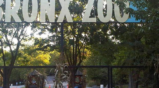 Ticket booths are empty and the gates are chained shut at an entrance to the Bronx Zoo in New York where a man was mauled by a tiger (AP)