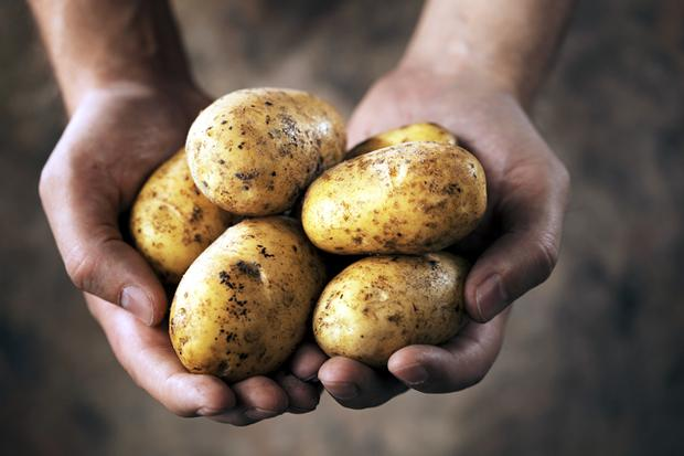 Super spud field trials are expected to be announced in June