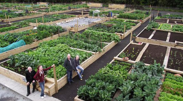 People at the thriving Colin allotment on the Colinglen Road in Poleglass