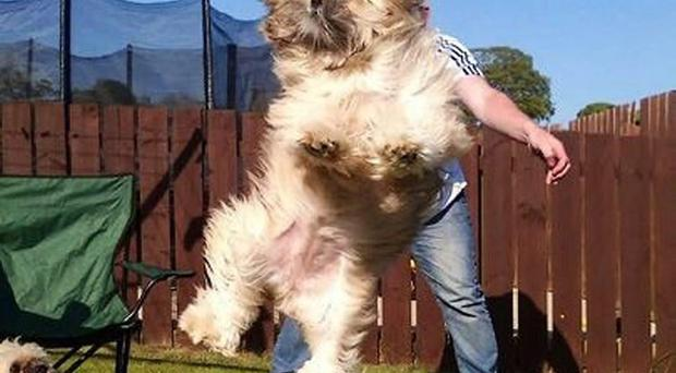 WINNER: Luke Townsley Age: 6 Ballynahinch This is my dog Amber, she jumps for joy when she sees the sun come out!