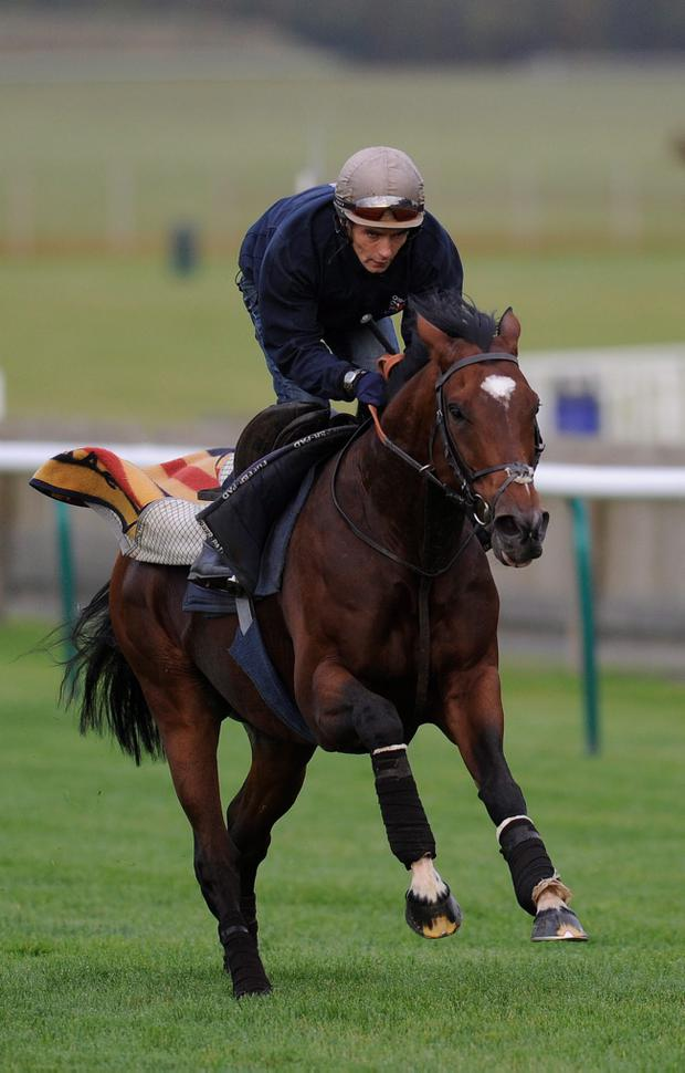 Rain could play a part for Frankel at Ascot