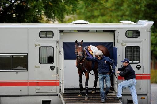 NEWMARKET, ENGLAND - OCTOBER 10: Frankel leaves the horsebox before galloping at Newmarket racecourse on October 10, 2012 in Newmarket, England. (Photo by Alan Crowhurst/Getty Images)
