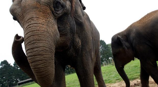 A keeper was injured while washing a two-year-old male Asian elephant at Taronga zoo in Sydney, Australia