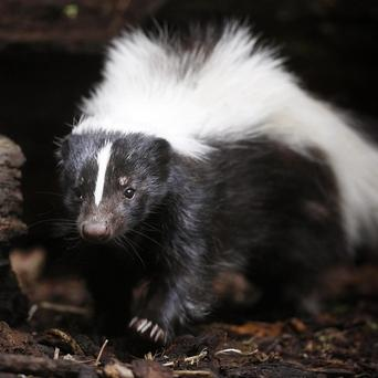 A girl was shot in the shoulder, arm, back and neck after being mistaken for a skunk
