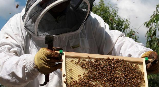 Beehives worth a total of 500 pounds have been stolen in County Down