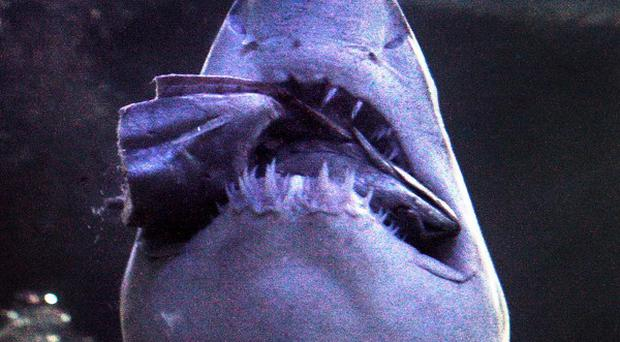 The type of shark involved in a fatal attack off the Californian coast remains unknown