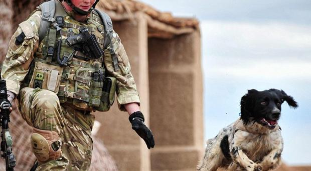 Lance Corporal Liam Tasker and his springer spaniel Theo, who was posthumouslypresented with the PDSA Dickin Medal (MoD/PA)