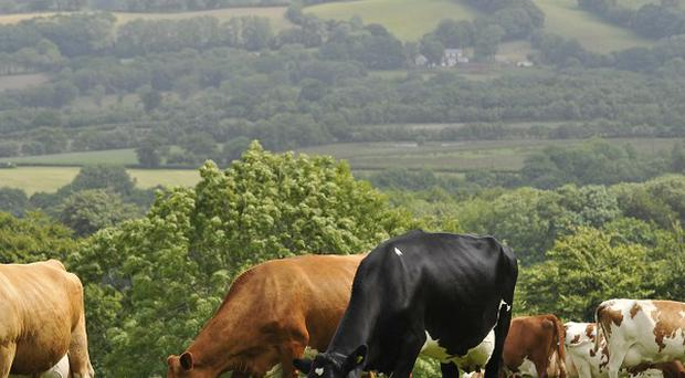 It is understood the pensioner died after falling into a piece of cattle feeding equipment