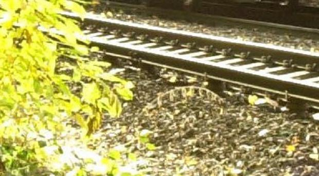 Leaf fall makes railway lines slippery, impacting on train punctuality