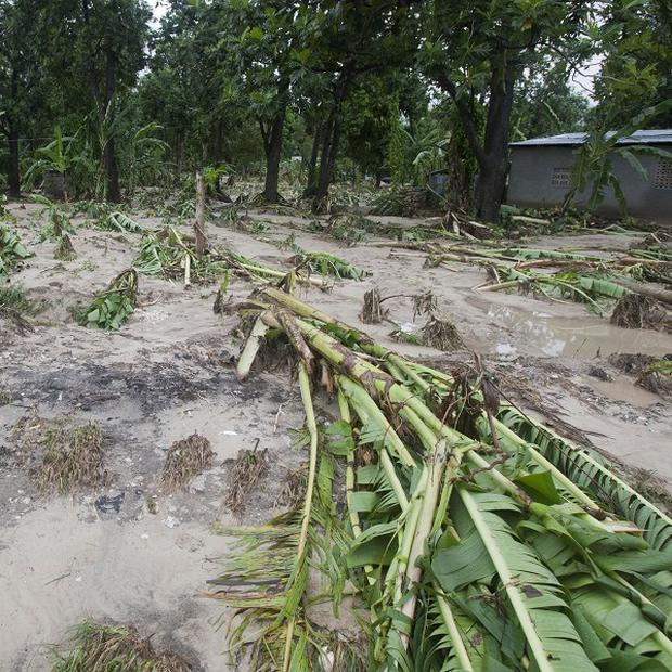 Downed banana trees lie on a farm damaged by the heavy rains from Hurricane Sandy in Gran Goave, Haiti (AP)