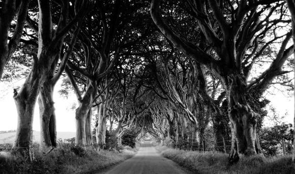 The Dark Hedges have attracted visitors from all over the globe