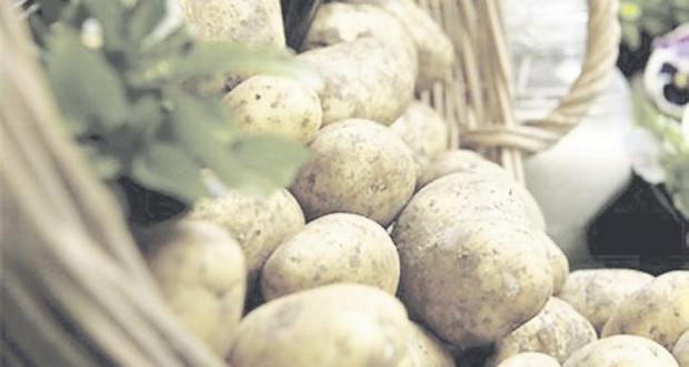 The new season Comber, or Comber early as it's sometimes called, is regarded as the king of the potato crop in Northern Ireland thanks to the climate in which it's grown, sheltered by the Mournes and the Ards Peninsula. It's also harvested earlier than potatoes in other regions.