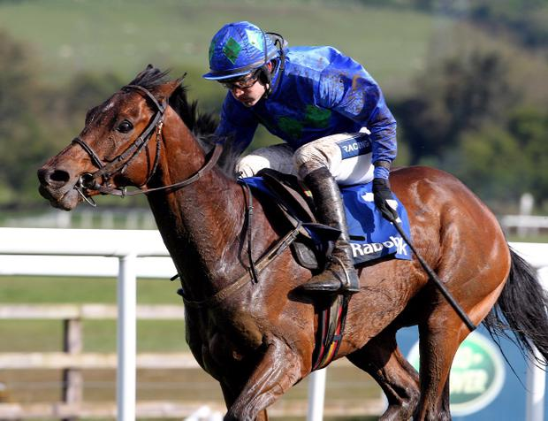 Hurricane Fly is returning to Punchestown on Sunday for the Morgiana Hurdle