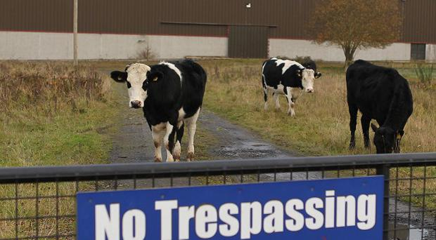 Jessbrook Equestrian Centre, previously owned by drug trafficker John Gilligan, is to be sold by The Criminal Assets Bureau