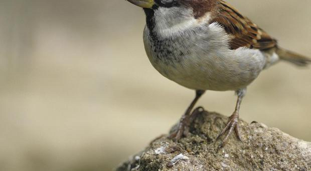 Around 90% of the losses have affected the most common and widespread species, including sparrows, skylarks, grey partridges and starlings
