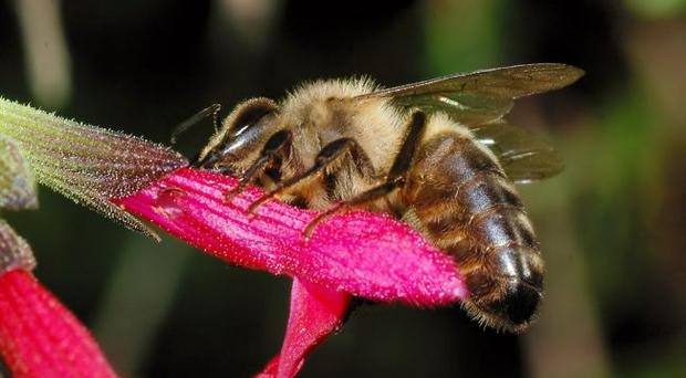 Hive of activity: Beekeepers have been called on to help save the black honeybee