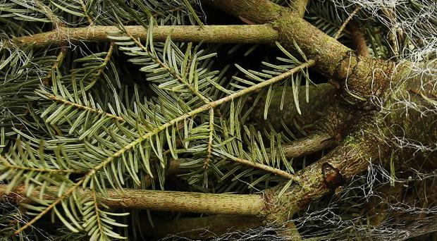 An Austrian homeowner was left with 14 tonnes of Christmas trees in their garden after a truck crash