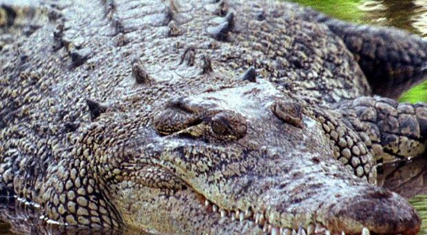 A boy has been snatched by a crocodile in Australia