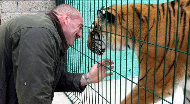 Meet the man who keeps tigers, and even tickles their ...