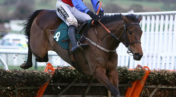 Quevega winning at Cheltenham