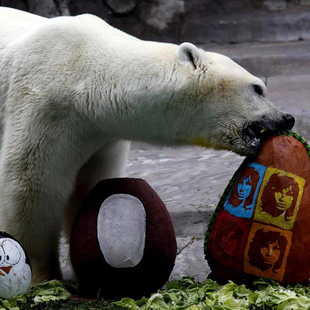 Winner, the last polar bear of Buenos Aires zoo, has died after suffering becoming exasperated by the scorching heat of an austral summer (AP)