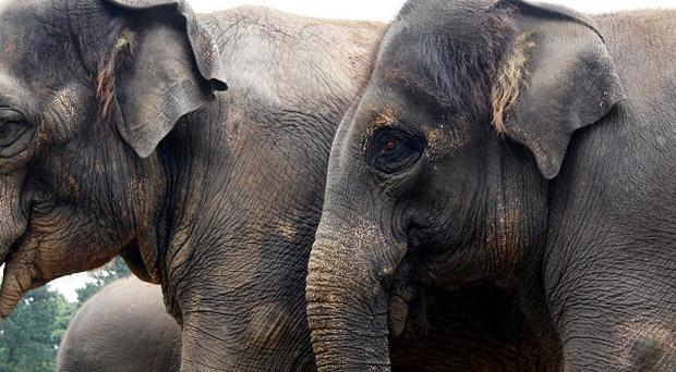 Brigitte Bardot is threatening to go into Russian exile unless France halts plans to put down two sick circus elephants