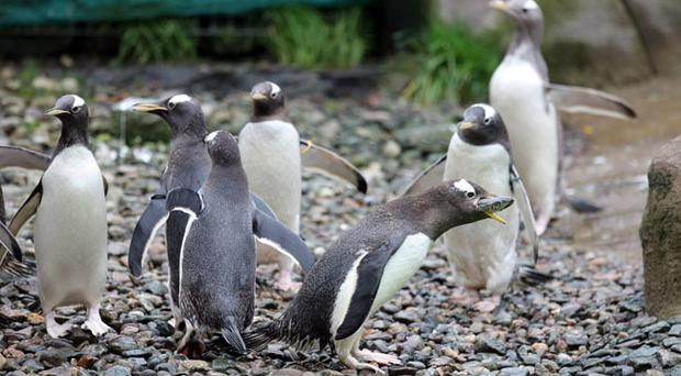 Animals pictured at Belfast Zoo