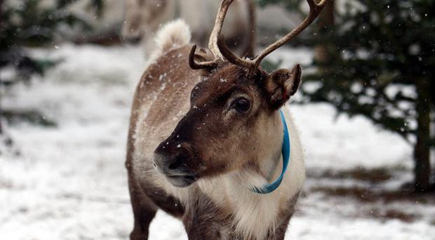 A reindeer was taken around a number of wards at the Royal Hospital for Sick Children in Glasgow