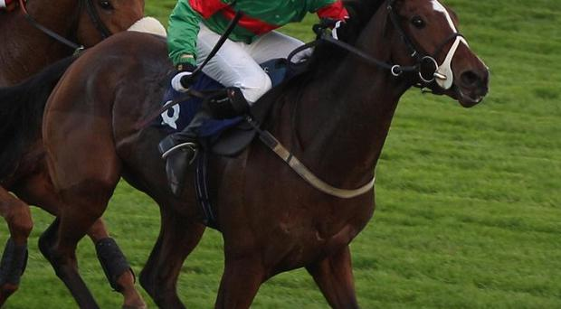 Star Of Aragon will run at Dundalk on Friday evening