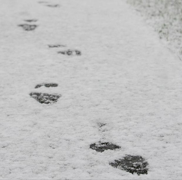 Dutch police caught a burglar after following his footprints in the snow