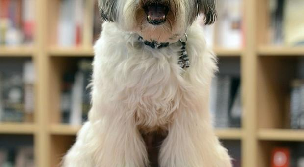 Britain's Got Talent winning dog Pudsey will perform at the NTAs