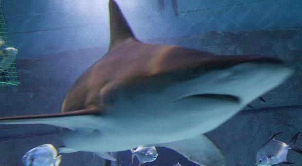 A British holidaymaker reportedly grabbed a shark by the tail on an Australian beach