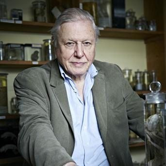 Sir David Attenborough has no plans to retire at 86