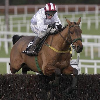 Pandorama may take his chance in the Grand National at Aintree