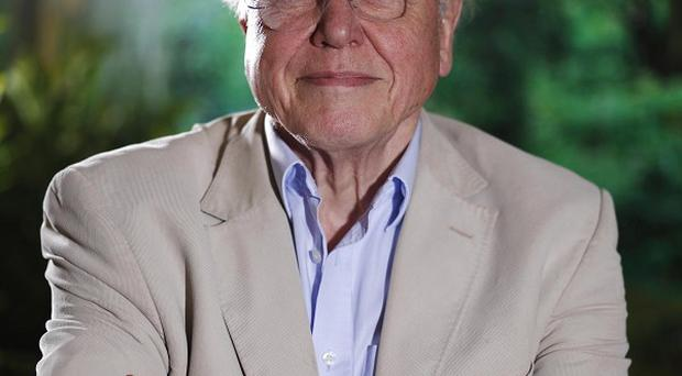 Sir David Attenborough said he would ideally 'hand the torch' over to Brian Cox