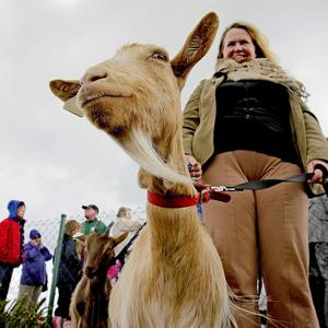 Marian Kelly from Dublin Community Growers with Maggie May, one of the three goats introduced onto Howth Head in Dublin
