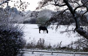 A horse in a field next to the River Chelmer in Essex, after heavy snow