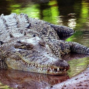 A man in his 70s died after trying to rescue a friend from a crocodile in Zimbabwe