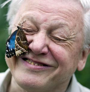 Celebrated naturalist Sir David Attenborough announced a butterfly survival zone in Co Fermanagh.