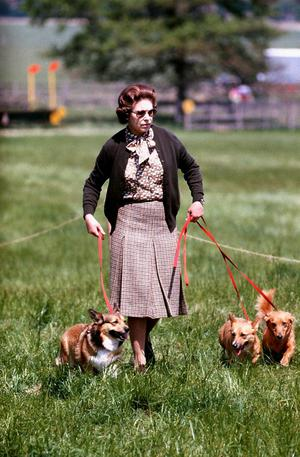 17/5/1980 Queen Elizabeth II with some of her corgis walking the Cross Country course during the second day of the Windsor Horse Trials. PRESS ASSOCIATION Photo.