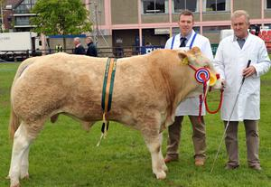 Colin and Raymond Todd from Lisburn with his Blonde Junior Champion at the Balmoral show