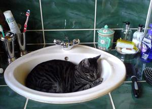 <strong>BELFAST TELEGRAPH PETS GALLERY  </strong>Tiggy in the tub. Submitted by Helena White, Comber
