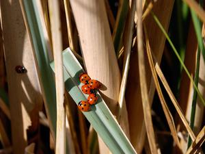 Ladybirds in the sun! Submitted by Alan Yeates, Bushmills